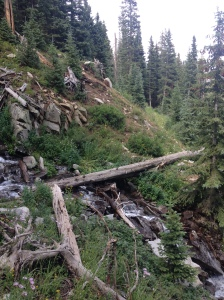 That log is huge, and the waterfall was very steep.  Hard to tell on the iPhone pic...