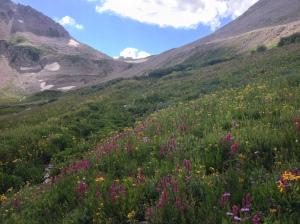 The wild flowers up high are really goin' off! Wow!